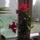 Szombaton_keszult_kepek__7_1771593_5382_t