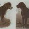 Ős-rottweiler 1883