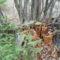 Késő őszi képek 11
