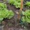 Novemberi fejes saláta