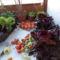 Saláta a verandán cserépben,