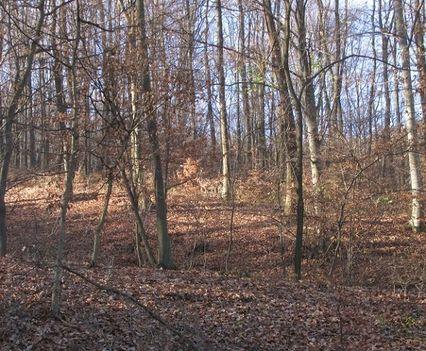 Mátrai erdő