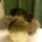 Szőrme kalap - róka szél, perzsaláb tetőrész  - HADVÁRI model