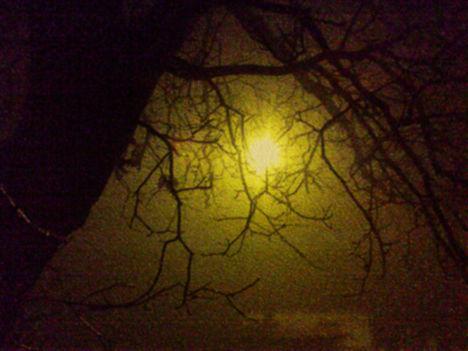 Faágak-ködös-fényben