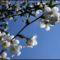 Majtényi Erik: A tavasz