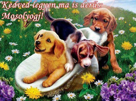 Aranyosi Ervin: Kutyusnak lenni jó!