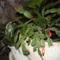 Bimbózó kaktuszom