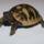 eladó teknőseim