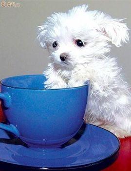 Kutyus és a csésze