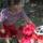 Nagy Bálint Csilla képalbuma