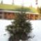 Feldíszitett fenyőfa várja a kirándulókat