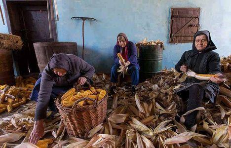 Kukoricafosztás
