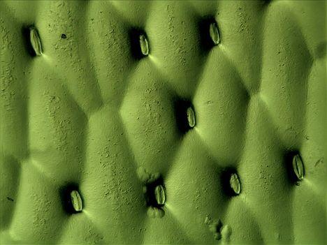 Zöldike (3)