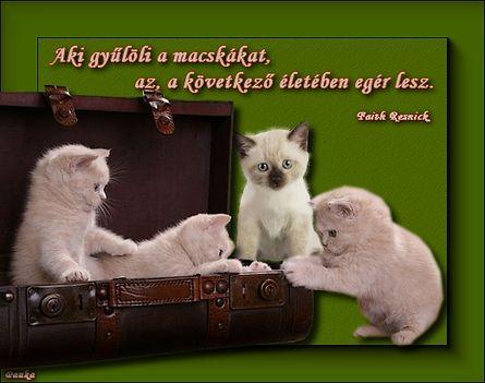 Aki gyűlöli a macskákat az, a következő életében egér lesz