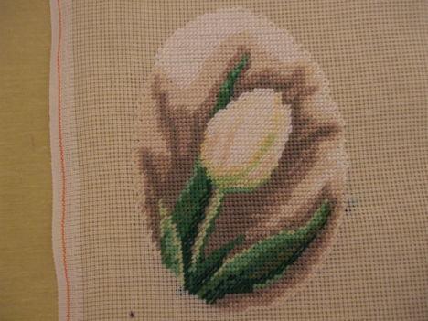 fehér tulipán