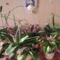 orchideák...