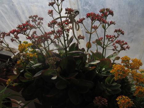 tavasz a télben 4