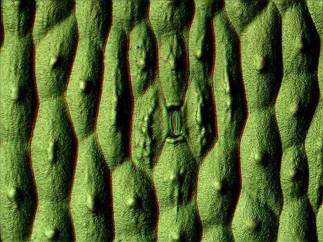 Aloe vera 3D