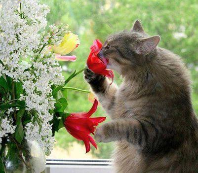 Cica virággal