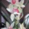 Cymbidium virágok egy hónappal később