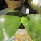 Phalaenopsis Violacea levélkezdemény