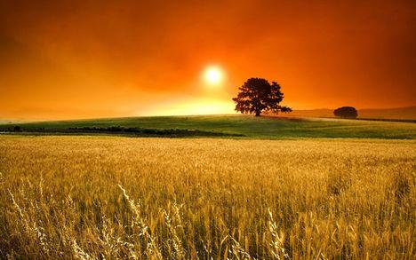 A természet nyári képei 11