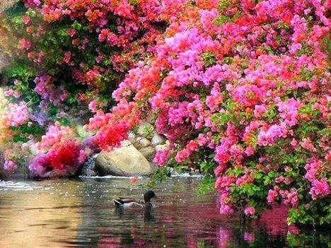 A természet nyári képei 12