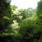 A természet nyári képei 1