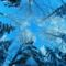 Csillagot formázó fák télen