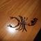 Skorpió felülnézet