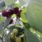 Cseresznye szüret