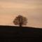 Magányos fa (Tarján)