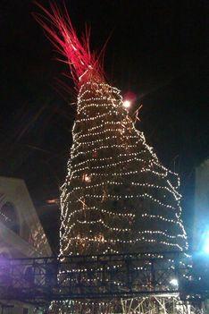 nagy bambusz karácsonykor2013