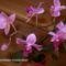 Orchideáim 1
