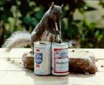 alkesz mókus