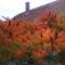 az ecetfa 2008 ősz