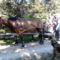 Csoki ismerkedik a lovakkal