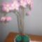 háromszínű orchidea