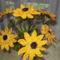 Horgolt virágaim 001