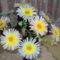 Virágaim 087