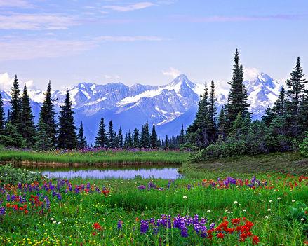 British-Columbia-Virágok-02365