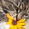 Macska virággal :)