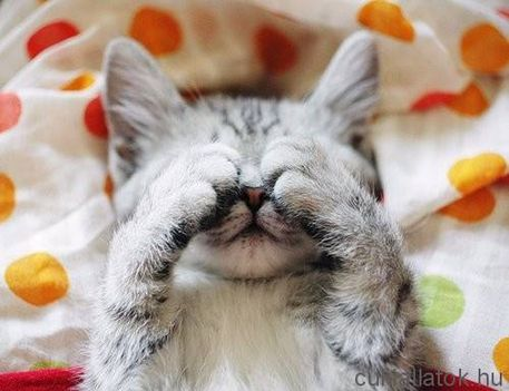 Álmos cica