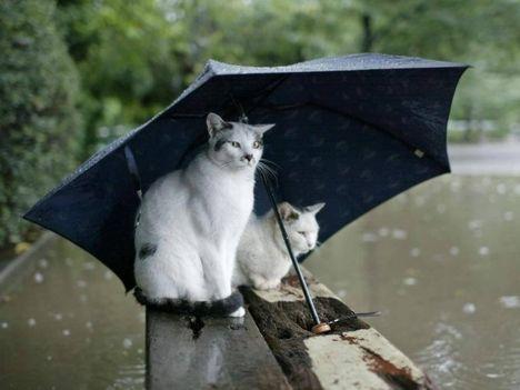 Cicák esernyővel