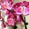 Somlyó Zoltán: Orchideák