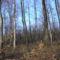 bakonyi erdő