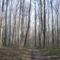 Bakonyi fák