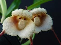 A virágoknak is lehet arcuk