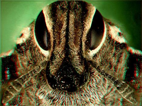 Ormányos bogár