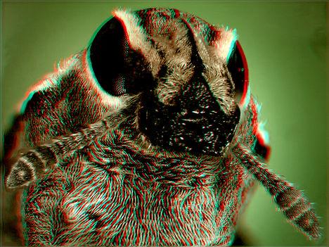 Ormányos bogár 2